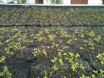 revestimento-modular-vivo-4l-telhado-verde-cobertura