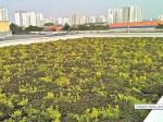 revestimento-vivo-flat-4l-telhado-verde-cobertura-paisagismo