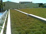 Telhado Verde - revestimento vivo modular 17L