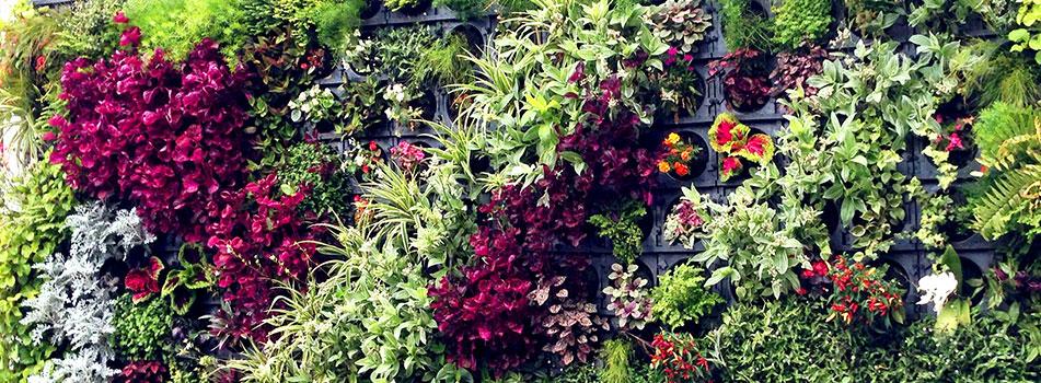 jardim vertical urbano:Jardim Vertical