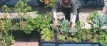 plantando-horta-urbana