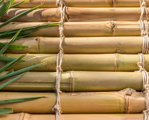 vara de bambu