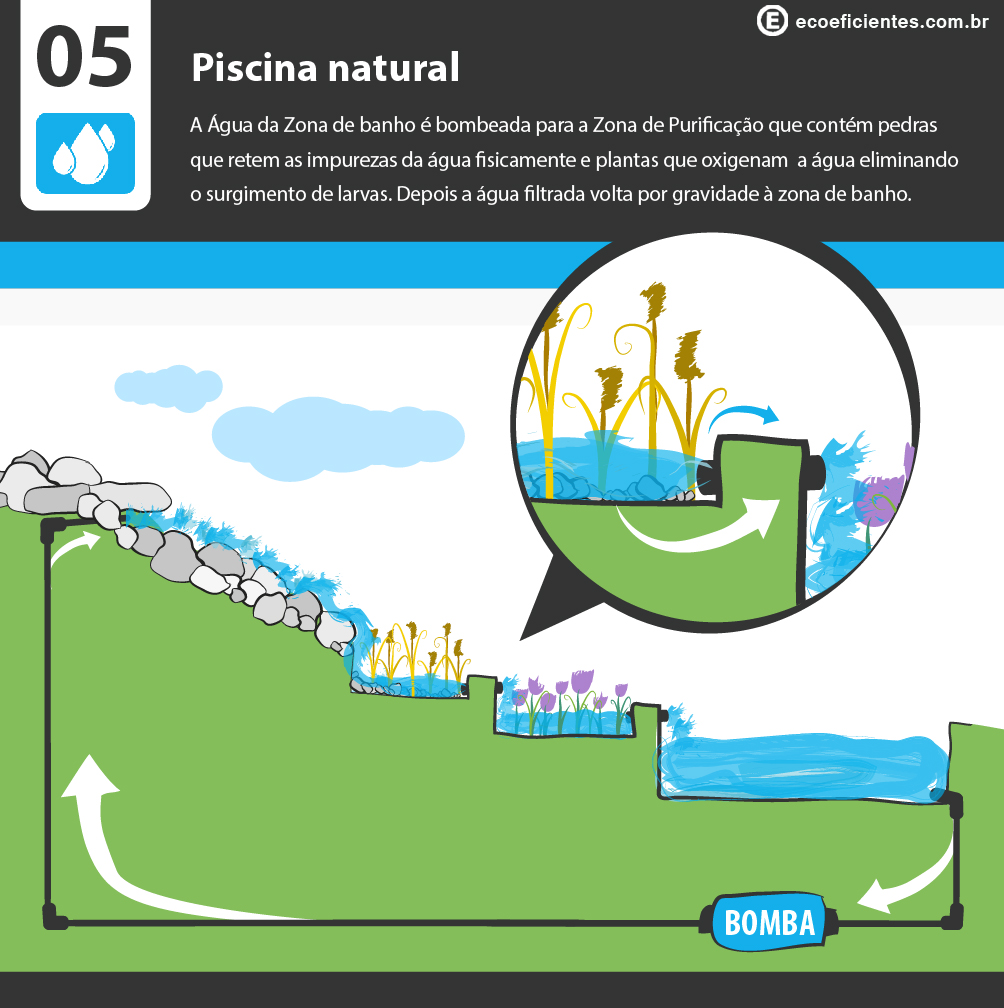 O que e como fazer uma piscina natural ecoeficientes for Como construir una piscina natural ecologica
